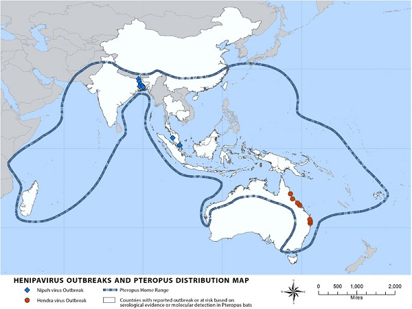 nipah virus distribution map