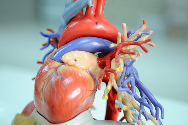 what is coronary heart disease ?