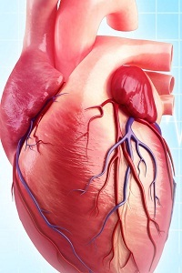 Can You Die From An Enlarged Heart (Sudden Death)?