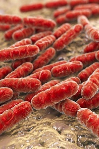 What is an HSV 2 Outbreak? How often do HSV 2 outbreaks occur?