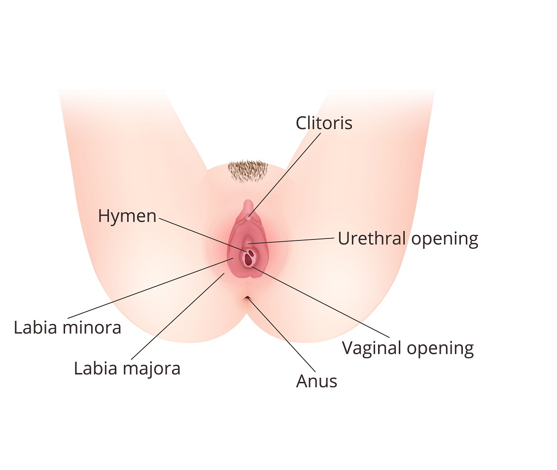 Anatomy of femal external genital organs