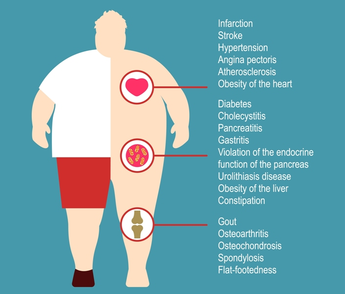 The effect of obesity on the health and human internal organs
