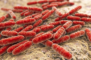 What are Probiotics and Their Benefits in Tooth Decay?