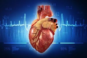 Human Heart: Anatomy, Function, Chambers, Location, Facts