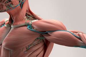 Pinched Nerve in Shoulder: Causes, Symptoms, Treatment