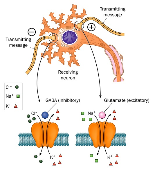 Neurotransmitters involved in Epilepsy