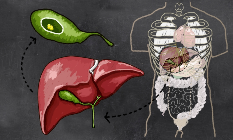Gallbladder location and anatomy in the human body