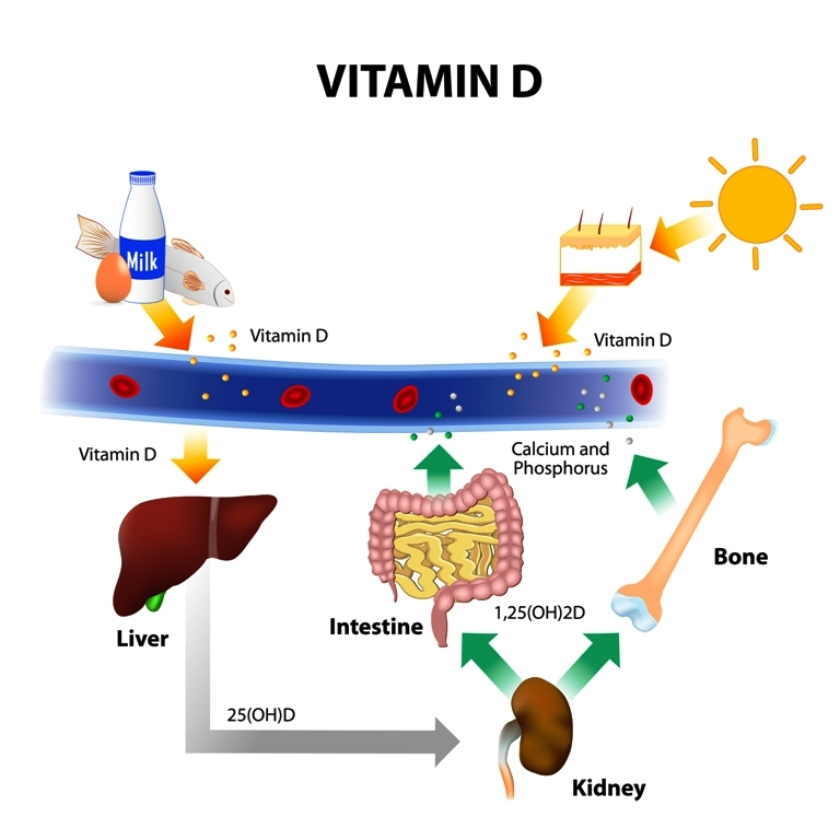 Importance of calcium and vitamin D and the mechanism of utilization in body