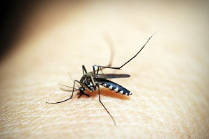 All You Should Know About Malaria